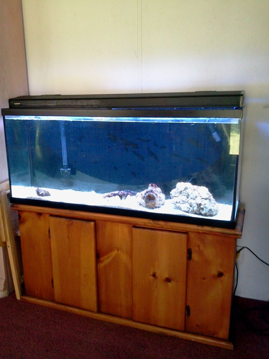 55 gallon fish tank oak stand 55 gallon aquarium with for 55 gallon fish tank stand