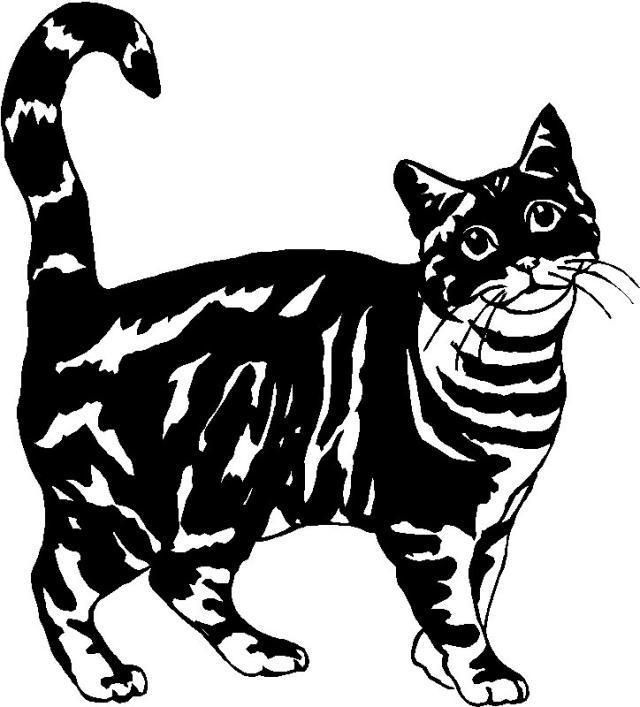 Tiger Stripe Cat Graphic Decal Sticker